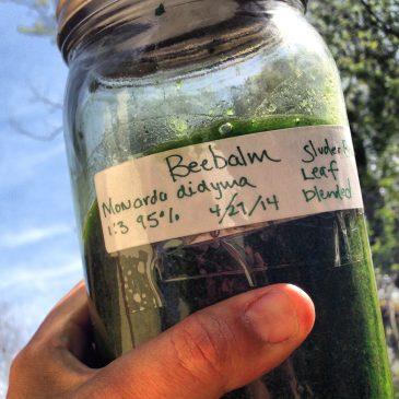 Plant Medicine and Food