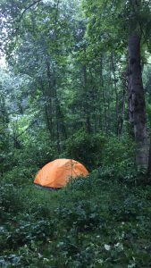 Solitary orange tent in forest at the firefly gathering